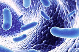 Principales beneficios de los probióticos