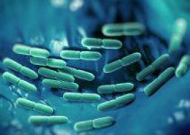 Lactobacillus gasseri cepa probiótica