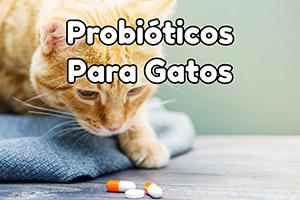 Probióticos para gatos